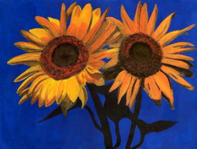 Fotografije suncokreta Sunflowers